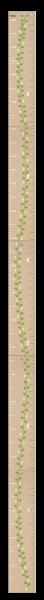 Familien-Grössenmesser faltbar 0 bis 200 cm